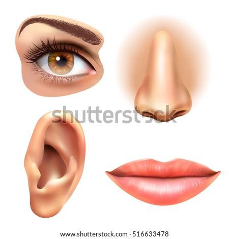 parts of the nose