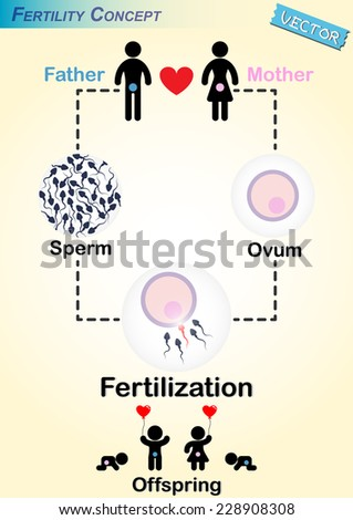 Human Fertilization Diagram Man Produce Sperm Stock Vector (2018 ...