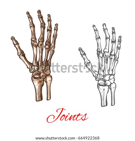Human Hand Bones Joints Skeleton Vector Stock Vector Hd Royalty