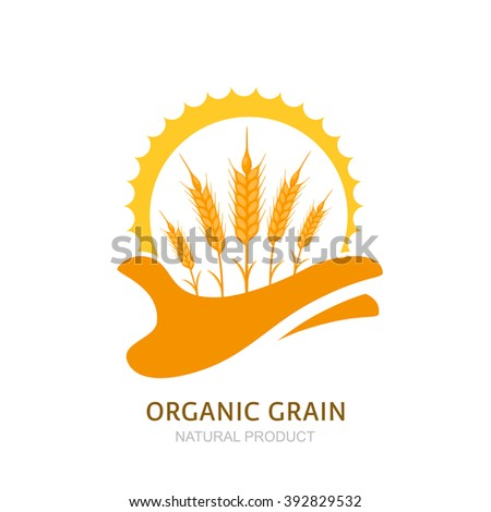 Human hand holding wheat ears and sun. Vector logo, label, package design elements. Barley, or rye illustration. Concept for agriculture, organic cereal products, harvesting grain and farming.  - stock vector