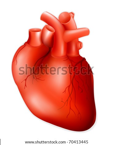 Human heart, eps10 - stock vector