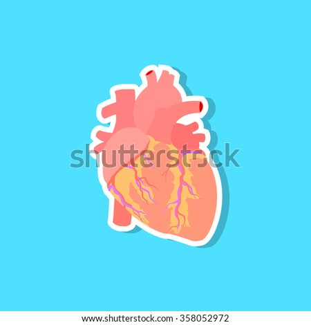 Human heart icon, vector illustration  - stock vector