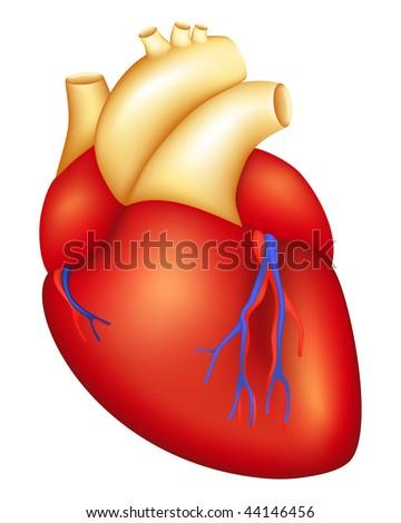 Human Heart, mesh - stock vector