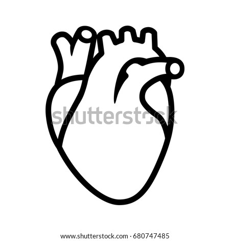 Human Heart Organ Aorta Arteries Line Stock Vector ...