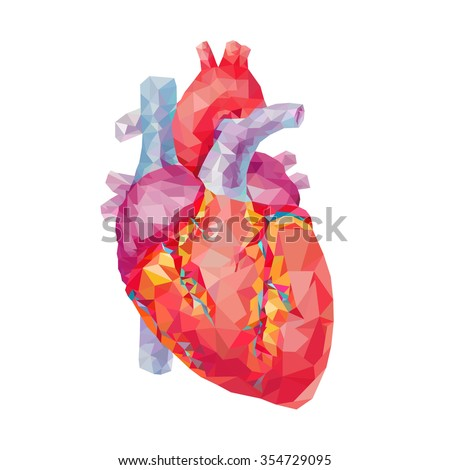 human heart polygonal graphics vector illustration stock vector, Muscles