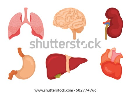 human muscle stock images, royalty-free images & vectors, Muscles