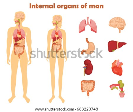 Human internal organs icon set vector stock vector 683220748 human internal organs icon set vector stock vector 683220748 shutterstock ccuart Choice Image