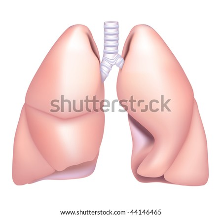 Human Lung, mesh - stock vector