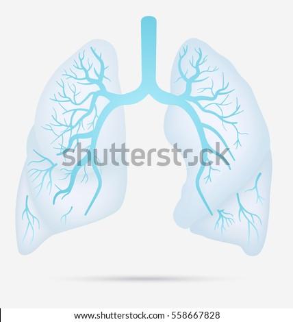 Human Lungs Anatomy Asthma Tuberculosis Pneumonia Stock Vector Hd