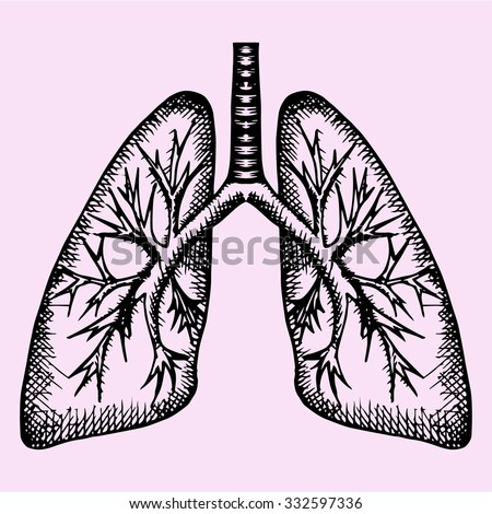 human lungs, doodle style, sketch illustration, hand drawn, vector - stock vector