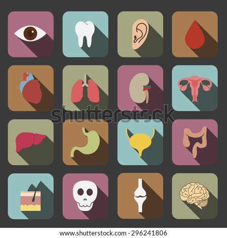 human organs icon - stock vector