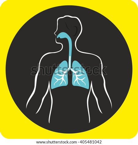 Human respiratory system in vector format. Human Lungs - stock vector