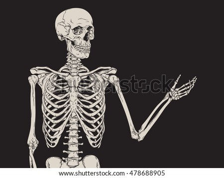 Human Skeleton Posing Isolated Over Black Stock Vector 478688905