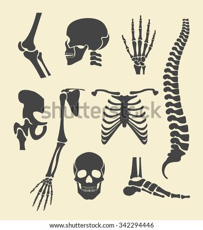 Human skeleton. Vector black illustration set - stock vector