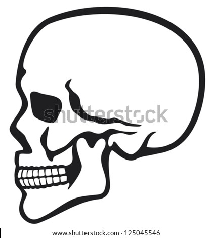 human skull profile (skull profile, side skull) - stock vector