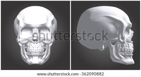 Human Skull Vector 06 - stock vector
