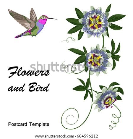 Hummingbird passiflora template postcards greeting cards stock photo hummingbird and passiflora template for postcards greeting cards wedding invitations vintage tropical m4hsunfo