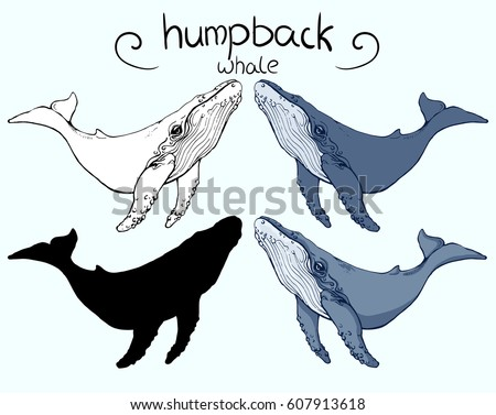humpback whale 4 version outline silhouette stock photo photo vector illustration 607913618 shutterstock - Whale Outline