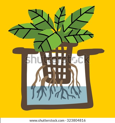 hydroponics agriculture plant. Vector illustration Flat - stock vector