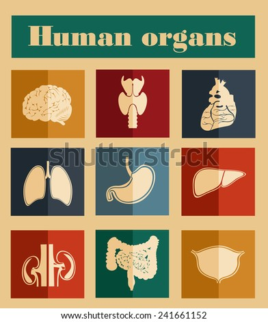 icons of human organs Flat design - stock vector