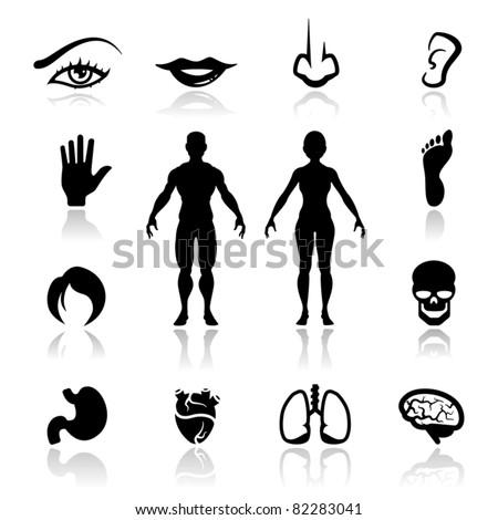 Icons set human organs - stock vector