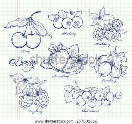 Icons set of hand drawn berries in retro style. Outline image on notebook page background. Doodle vector illustration. Design template - stock vector