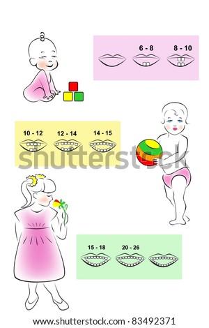 Illustrated children's teething scheme deciduous teeth. - stock vector