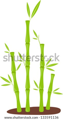 illustration bamboo vector