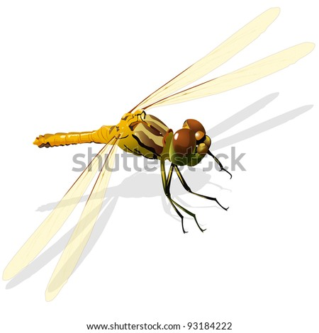 illustration, green dragonfly on a white background - stock vector
