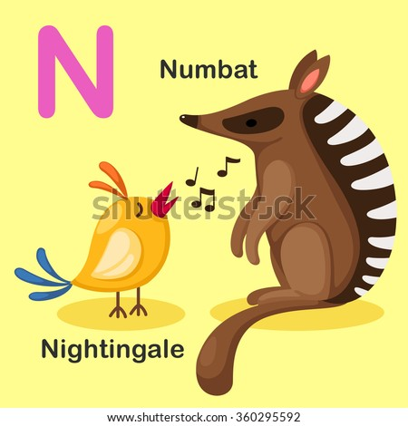 Illustration Isolated Animal Alphabet Letter N-Numbat,Nightingale - stock vector