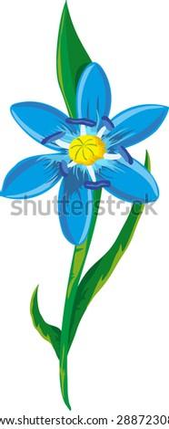 Illustration of a blue spring flower. Blue scilla flowers - stock vector