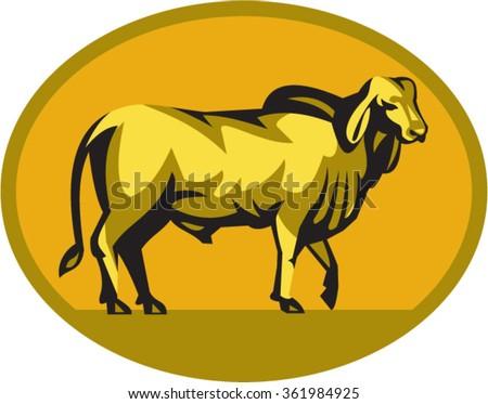 Illustration Brahman Bull Looking Front Viewed Stock Vector
