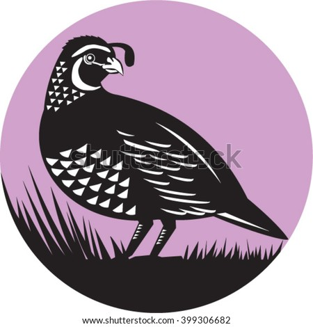 Illustration of a California valley quail bird looking to side set inside circle done in retro style.  - stock vector