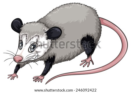 Illustration of a  close up opossum - stock vector