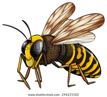 Illustration of a close up wasp - stock vector