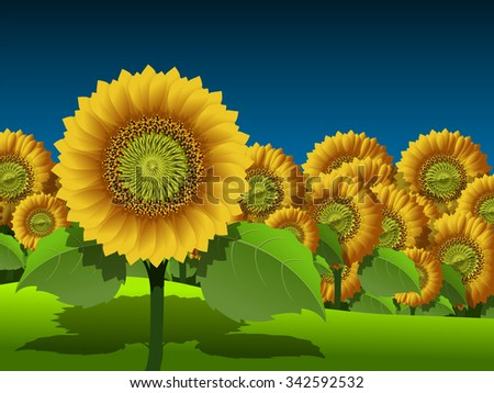 Illustration of a field of yellow sunflowers - stock vector