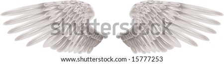 Illustration of a pair of outstretched beautiful white wings - stock vector