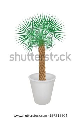 Illustration of A Palm Tree in Flower Pot