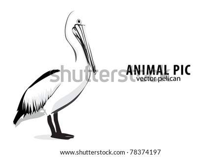 Illustration of a pelican on white - stock vector