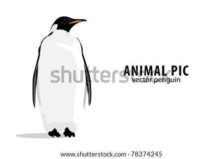 Illustration of a pinguin on white background - stock vector