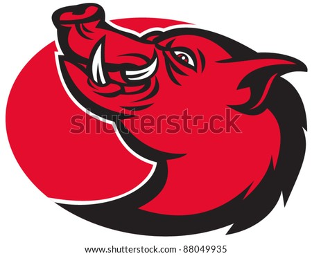 illustration of a razorback wild pig hog boar head with big tusk facing side on isolated white background - stock vector