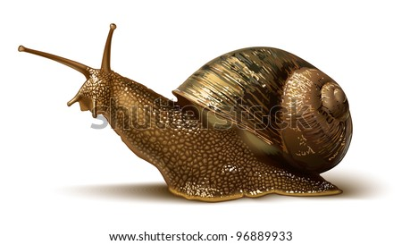 illustration of a snail - stock vector