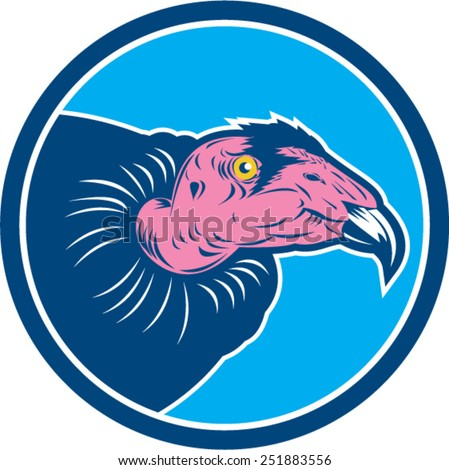 Condor Vulture Stock Images, Royalty-Free Images & Vectors ...