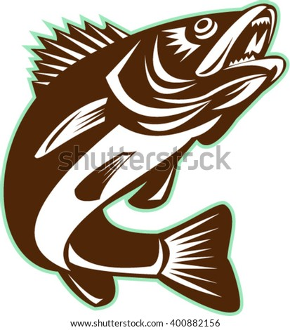 Illustration of a Walleye (Sander vitreus, formerly Stizostedion vitreum), a freshwater perciform fish jumping up on isolated background done in retro style.  - stock vector