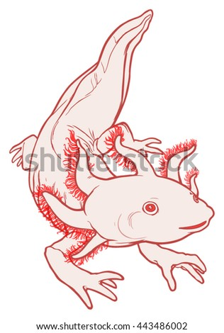 Axolotl Stock Images Royalty Free Images Vectors Shutterstock
