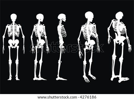 Illustration of an array of skeltons from different angles in a vector, eps, format. - stock vector