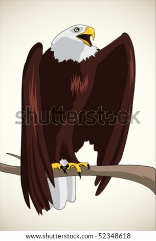 Illustration of bald eagle - stock vector