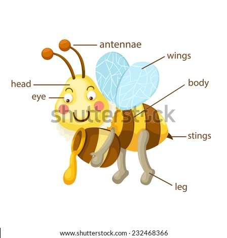 Animal Parts of Body Vocabulary Part of Body