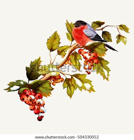 Illustration of branch with autumn leaves, berries and bullfinch. Hand drawn. Illustration is full editable, objects include hat are drawn by separate. Vector stock.