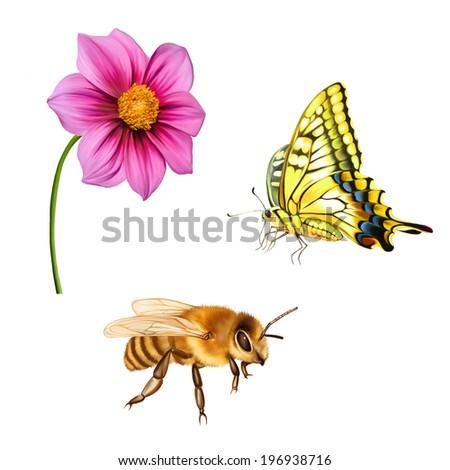 illustration of Dahlia flower. Pink flower, Spring flower.Isolated on white background. - stock vector